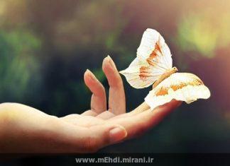 خدا و پرواز پروانه