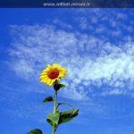 خ مثلِ خورشید، خ مثلِ خدا…