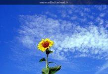 خورشید، گل آفتابگردان و خدا